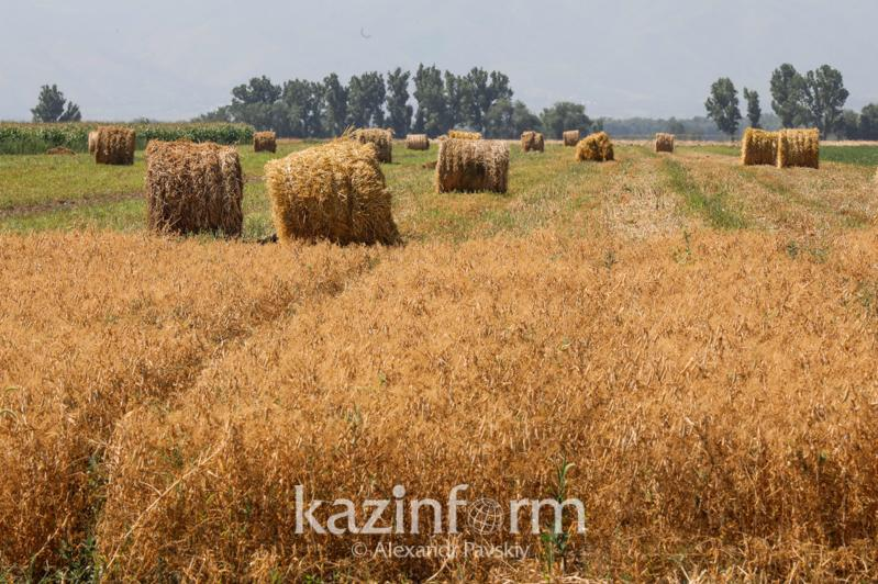 Трудности с кормами: Районы Костанайской области делятся друг с другом сеном