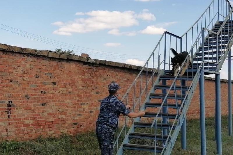 Как проходят будни собак-полицейских в Казахстане