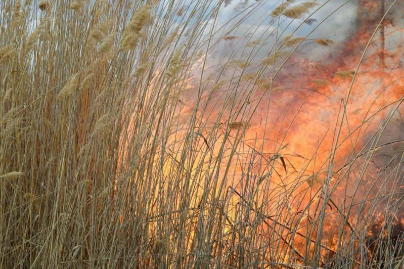 Пожар произошел близ колонии «Черный беркут»
