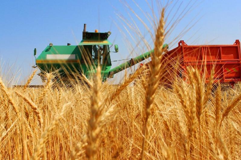 1-5月哈萨克斯坦小麦出口大幅增长