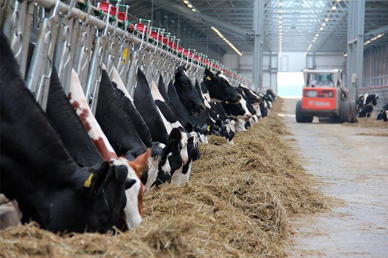 В Казахстане были нарушены основные принципы развития животноводства – Ербол Карашукеев