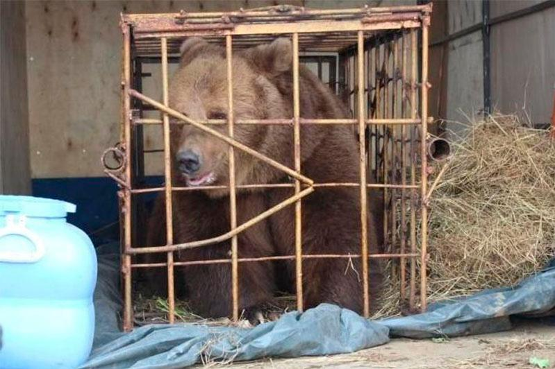 Медведица покусала пятилетнюю девочку на базе отдыха в Костанае