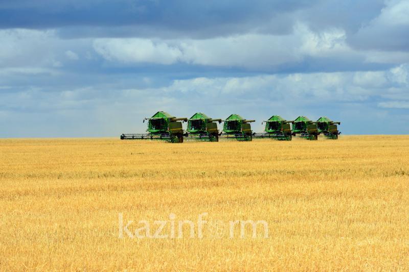 Убрано 11,8 млн га зерновых и зернобобовых культур – МСХ РК