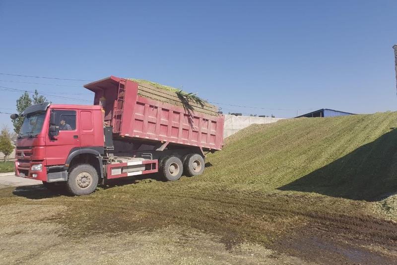 В Ордабасинском районе Туркестанской области готовы запасы зимних кормов