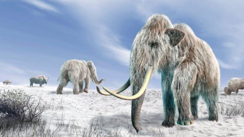 Ученые из США намерены вновь заселить тундру мамонтами