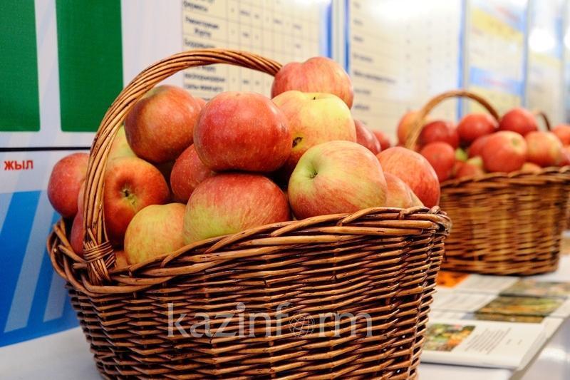 Туркестанские полицейские задержали подозреваемых в краже 1,5 тонны яблок