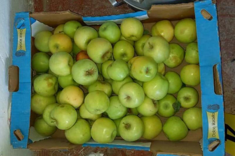 1,5 тонны яблок похитили у жителя Туркестанской области