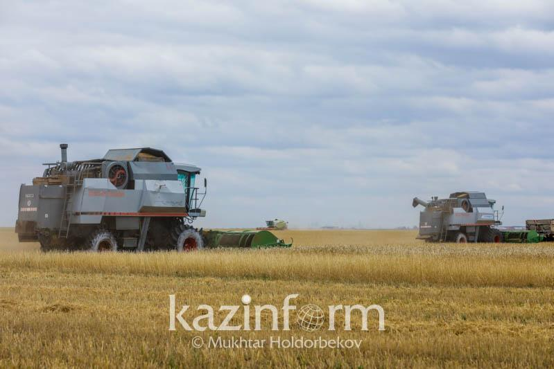 В Казахстане убрано 85,7 % уборочной площади зерновых и зернобобовых культур