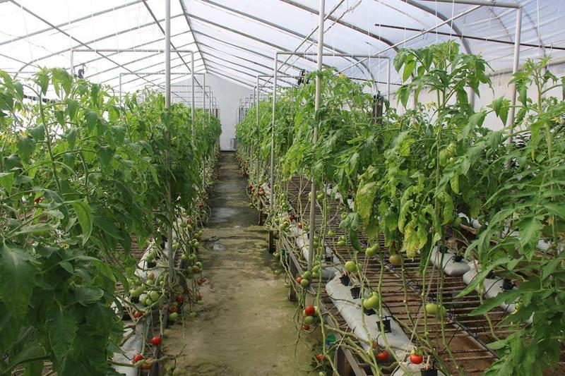 Теплицу на 60 тысяч тонн овощей и птицефабрику построят в Жезказганском регионе