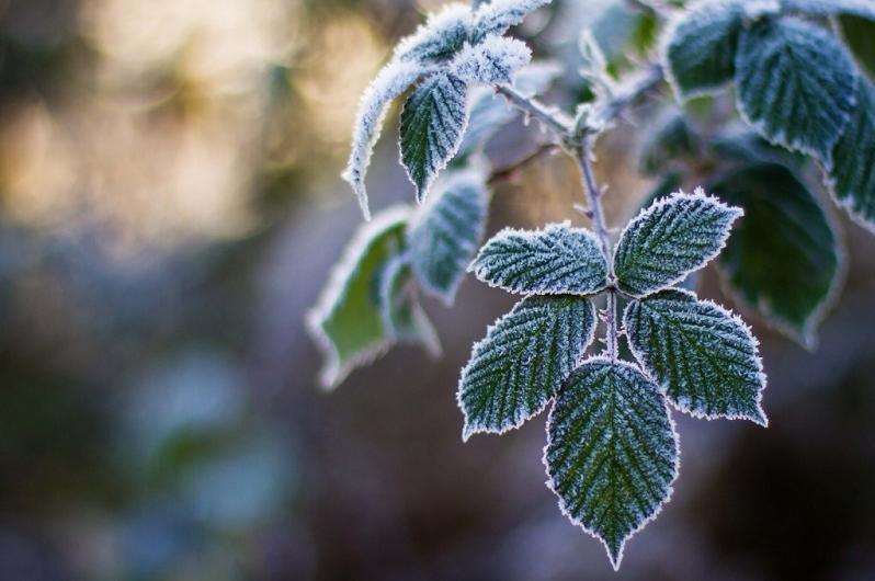 Заморозки прогнозируют в двух областях Казахстана