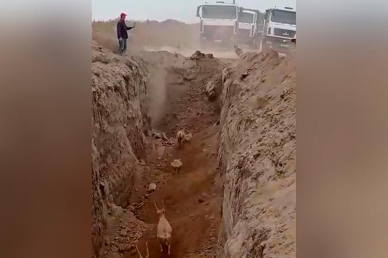 Batys Qazaqstanda kıikter jol salýshylar qazǵan transheıaǵa túsip ketti