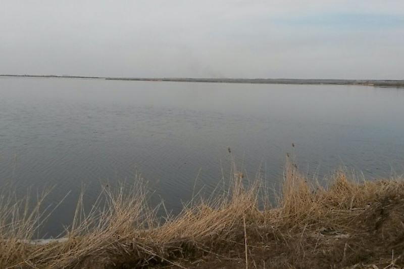 Несколько тонн хлореллы запустили в биопруд в Петропавловске