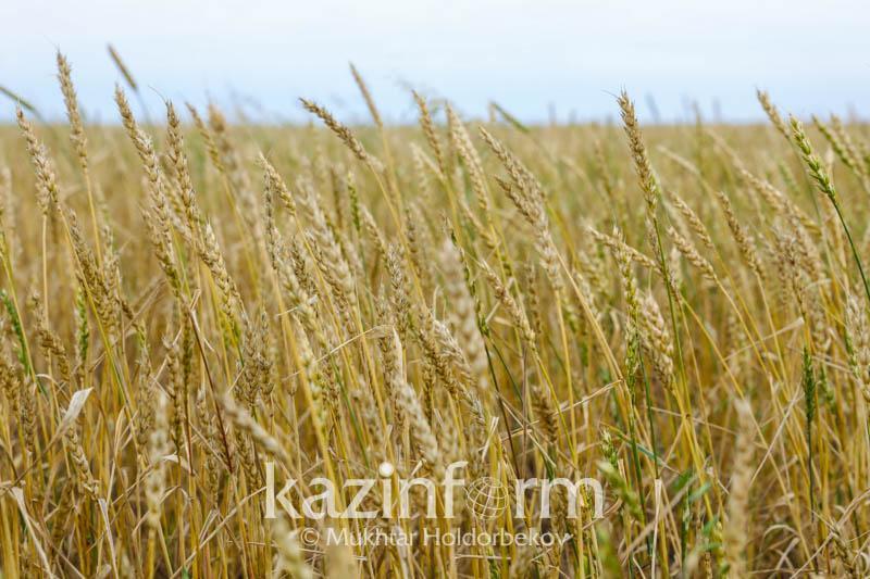 Глава крестьянского хозяйства: Основнойлимитирующий фактор – влага