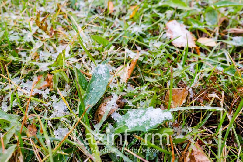 Ground frosts to grip 5 rgns of Kazakhstan