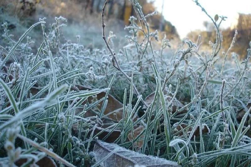 В шести регионах Казахстана ожидаются ночные заморозки