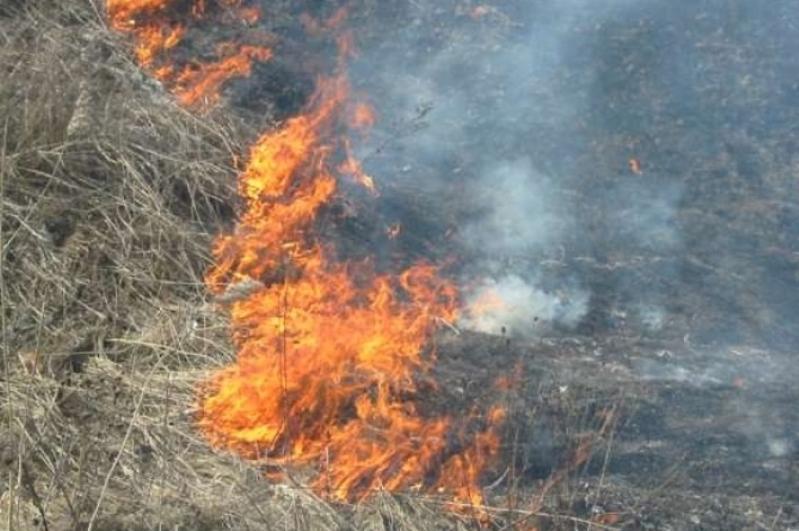 Сухостой загорелся в Алматы