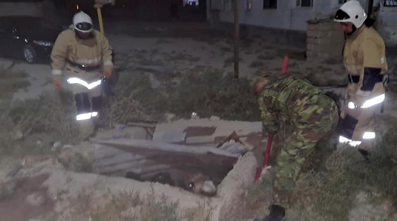 Спасатели вытащили верблюда из ямы в Мангистау