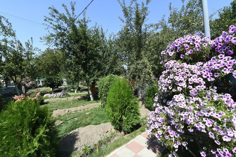 Самые зеленые дворы выбрали в Алматы
