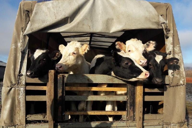 47 краж скота зарегистрировали в Павлодарской области