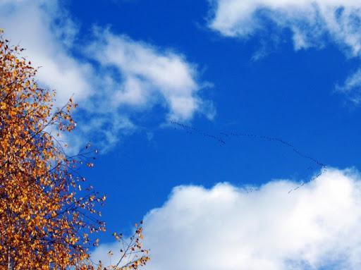Благоприятные метеоусловия ожидаются в Казахстане 21 сентября