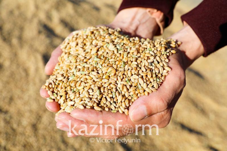 Зерно нового урожая характеризуется высокими показателями - Ербол Карашукеев