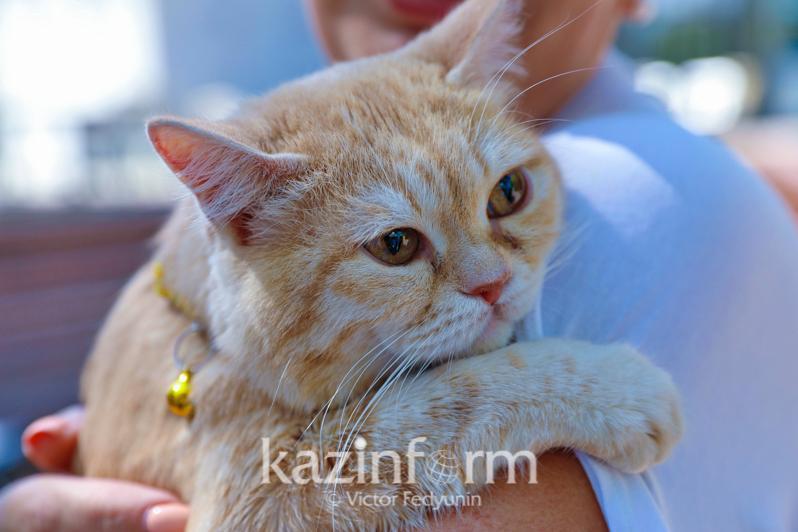 Бесплатная кастрация и стерилизация собак и кошек проводится в Нур-Султане