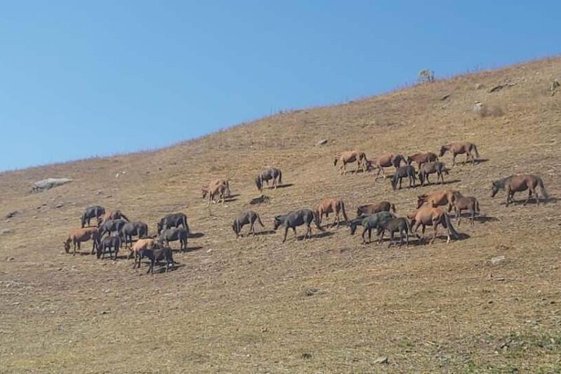 30 пропавших лошадей вернули полицейские жителю Алматинской области