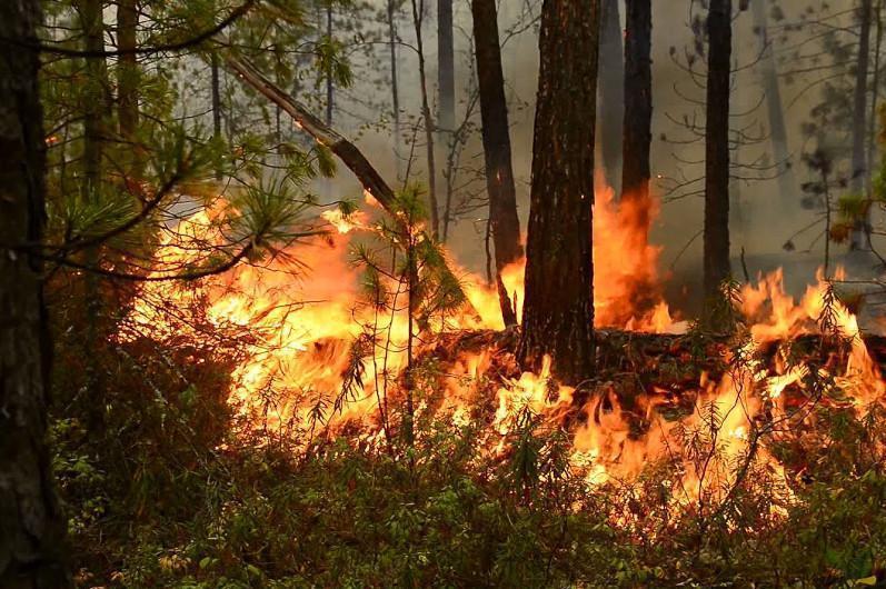 О росте лесных пожаров заявили в МЧС РК
