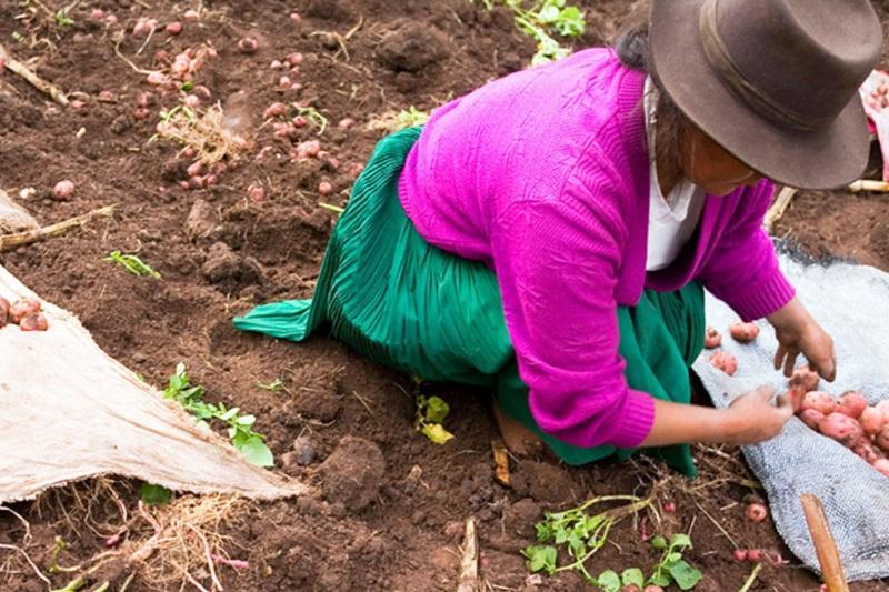 粮农组织警告:数十年来的发展努力遭遇挫折