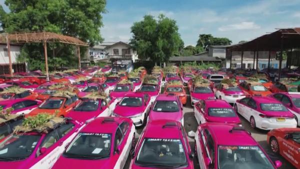 تايلاندتا تاكسي كومپانياسى كولىكتەرىنىڭ توبەسىنە باقشا ەكتى