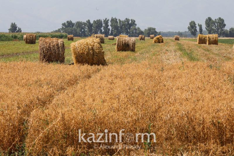 23,2 млн тонн сена для зимовки скота заготовили в Казахстане