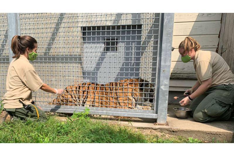 美国两家动物园为动物接种冠病疫苗
