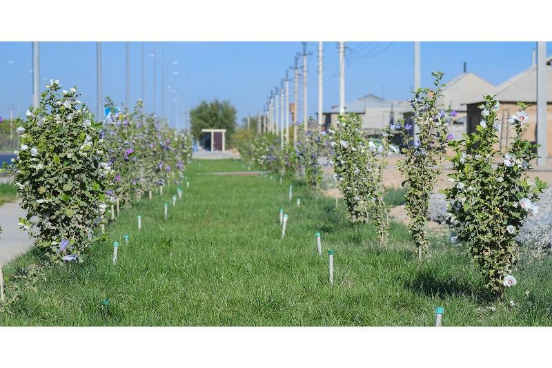 Работы по озеленению активно ведутся в Туркестане