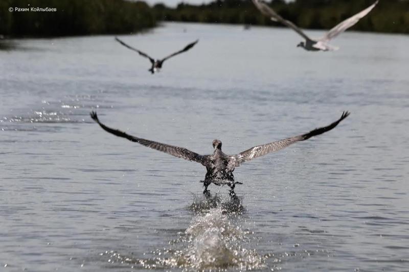Массовая миграция перелетных птиц началась в Атырауской области