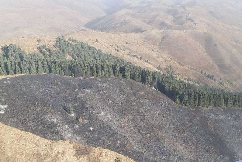 Крупный лесной пожар тушат в Иле-Алатауском нацпарке