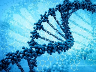 DNA could potentially predict people's lifespan: study