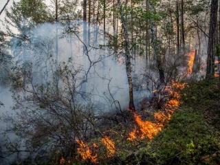 Forest ablaze at the national park