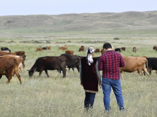 Kazakhstan adopts roadmap on dairy industry standards