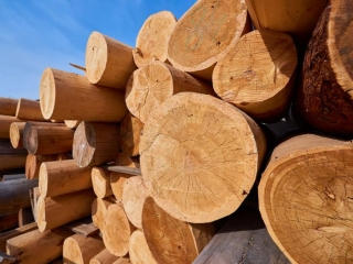 Kazakhstan bans export of timber