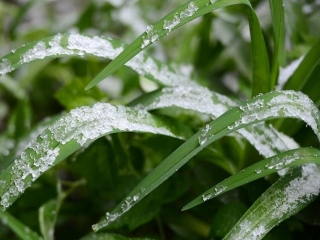 Ground frost expected in Kostanay region Sep 4