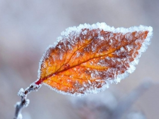 Ground frost forecast in Kyzylorda region