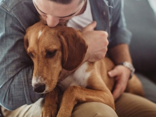 Dog ownership helps reduce loneliness through increasing social interaction: research