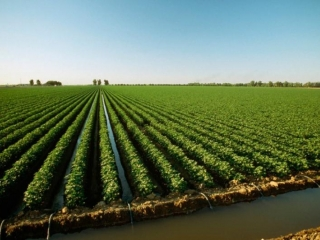 Kazakhstan's irrigated lands acreage to double in 10 years