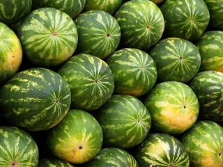 Turkestan rgn exports up to 6,500 tons of watermelons