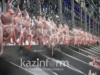 Kazakhstan reports rise in poultry production