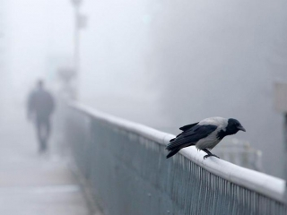 Fog and windchill to grip Kazakh capital