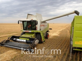 Harvested area of grains stands at over 83% in Kazakhstan