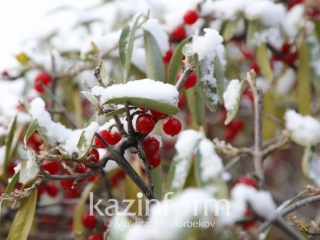 Snow to fall in northern parts of Kazakhstan