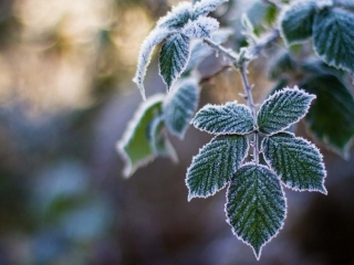 Ground frosts to grip 2 rgns of Kazakhstan