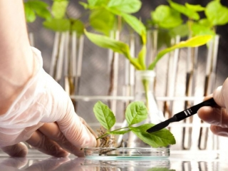 Kazakhstan to increase agrarian science funding by 2.3 times